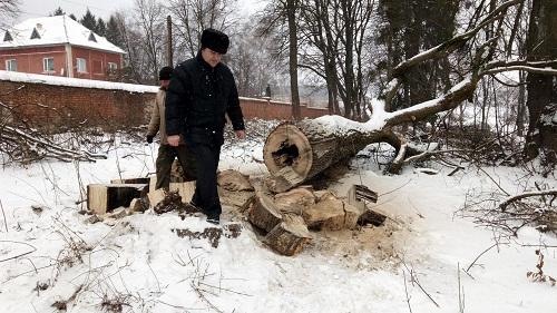 Законність зрізки дерев у Раївському парку дослідужватимуть журналісти Номер один